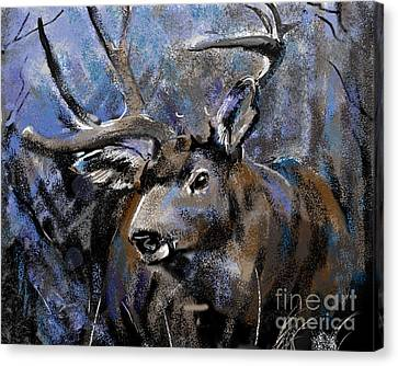Big Buck Canvas Print by Synnove Pettersen