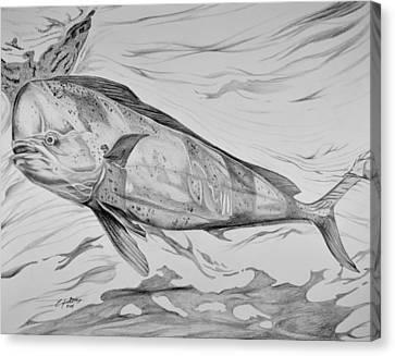 Big Bull Dolphin Canvas Print by Edward Johnston