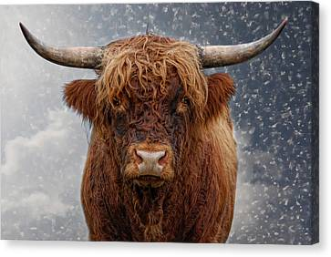 Big Bull Canvas Print