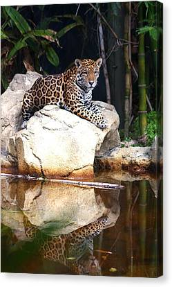 Big Cat Canvas Print by Diane Merkle