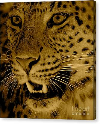 Big Cat In Sepia Canvas Print