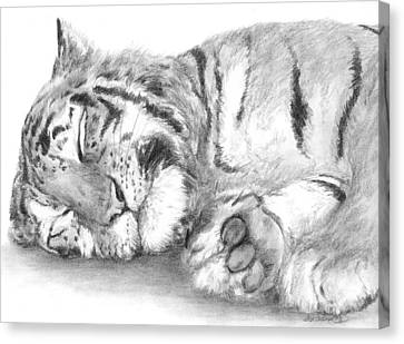 Big Cat Nap Canvas Print