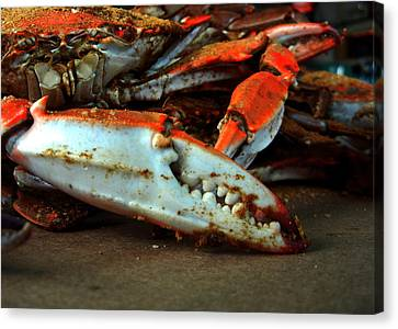 Canvas Print featuring the photograph Big Crab Claw by Bill Swartwout