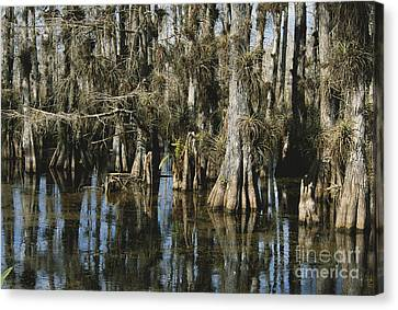 Big Cypress National Preserve Canvas Print by Mark Newman