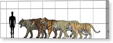 Big Felines Size Chart Canvas Print by Vitor Silva
