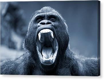 Big Gorilla Yawn Canvas Print