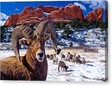 Big Horn Sheep At The Garden Canvas Print