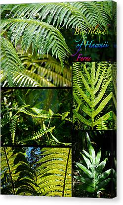 Big Island Of Hawaii Ferns 2 Canvas Print by Colleen Cannon