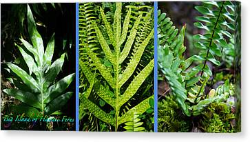 Big Island Of Hawaii Ferns Canvas Print by Colleen Cannon