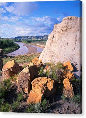Big Mo In Tr Canvas Print by Ray Mathis