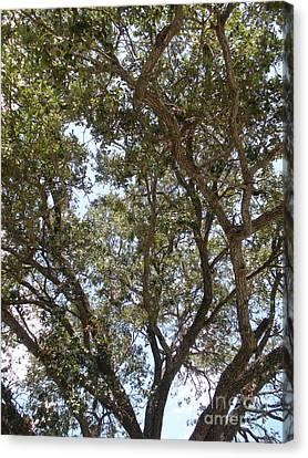 Big Oak Tree Canvas Print by Joseph Baril