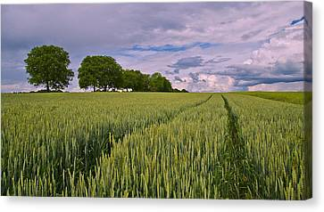 Big Sky Montana Wheat Field  Canvas Print by Movie Poster Prints