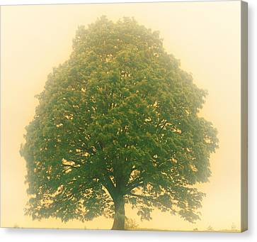 Aesthetic Landscape Image Canvas Print - Big Tree In Early Morning Mist by Panoramic Images