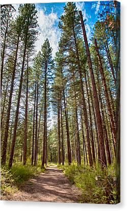 Big Valley Views Mvsta Trail Canvas Print