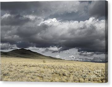 Big Volcano Field Canvas Print by Andrea Hazel Ihlefeld