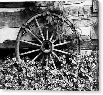 Big Wheel Bw Canvas Print by Mel Steinhauer