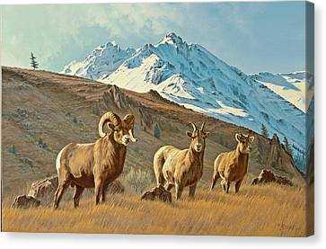 Bighorn Below Electric Peak Canvas Print by Paul Krapf
