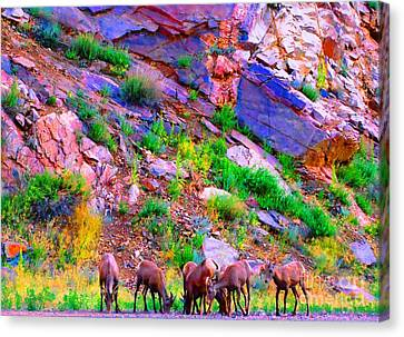 Canvas Print featuring the photograph Bighorn Grazing Convention by Ann Johndro-Collins