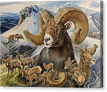 Canvas Print featuring the painting Bighorn Lifescape by Steve Spencer