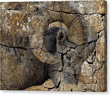 Bighorn Rock Art Canvas Print by Steve McKinzie