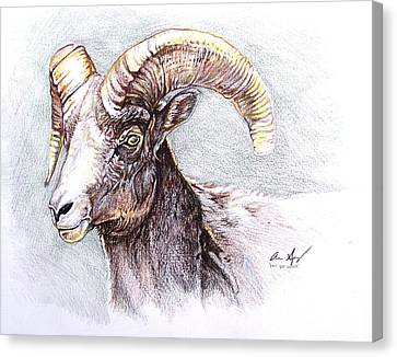 Mountain Goat Canvas Print - Bighorn Sheep by Aaron Spong