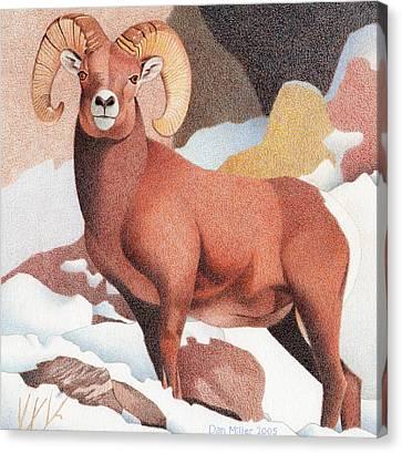 Bighorn Sheep Winter Canvas Print