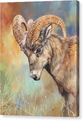 Bighorn Sheep Canvas Print - Bighorn Sheep by David Stribbling