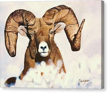 Bighorn Sheep Canvas Print by Jean Yves Crispo