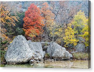Bigtooth Maple And Rocks Fall Foliage Lost Maples Texas Hill Country Canvas Print