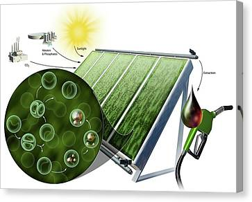 Biofuel From Algae Canvas Print by Nicolle R. Fuller