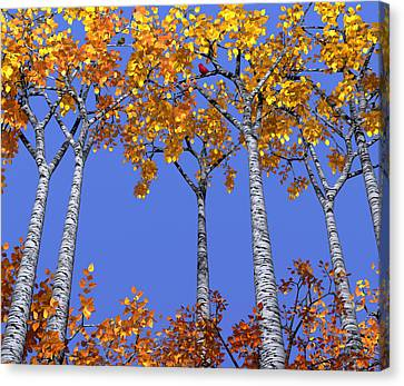 Birch Grove Canvas Print by Cynthia Decker