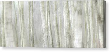 Birch Tree Impression No 1 Canvas Print by Andy-Kim Moeller