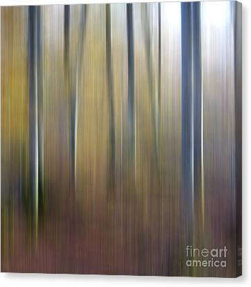 Birch Trees. Abstract. Blurred Canvas Print by Bernard Jaubert