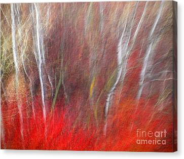 Bold Canvas Print - Birch Trees Abstract by Tara Turner