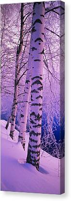 Birch Trees At The Frozen Riverside Canvas Print by Panoramic Images