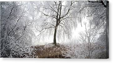 Birch Trees Covered With Snow Canvas Print