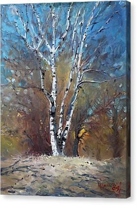 Birch Trees Canvas Print by Ylli Haruni