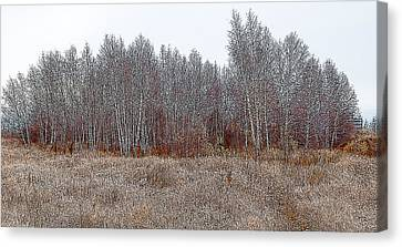 Birch Woods At The Edge Of Town Canvas Print by Rob Huntley