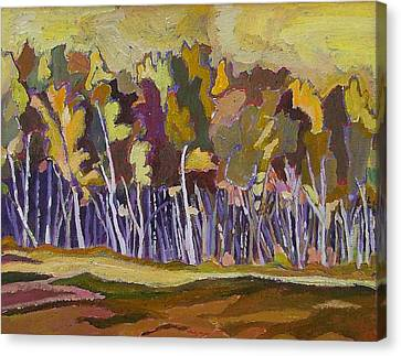 Birches In Autumn Canvas Print by Janet Ashworth
