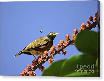 Bird And Bee Canvas Print
