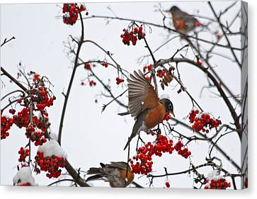 Canvas Print featuring the photograph Bird And Berries by Jay Nodianos