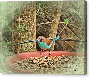 Bird And Feeder Canvas Print by Joan  Minchak