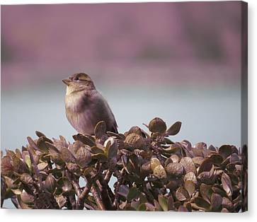 Bird And Jade Canvas Print by Brian Maloney