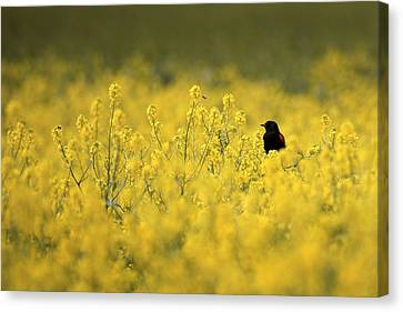 Canvas Print featuring the photograph Bird And The Bees Mg_9150 by David Orias