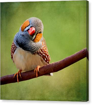Jordan Canvas Print - Bird Art - Change Your Opinions by Jordan Blackstone
