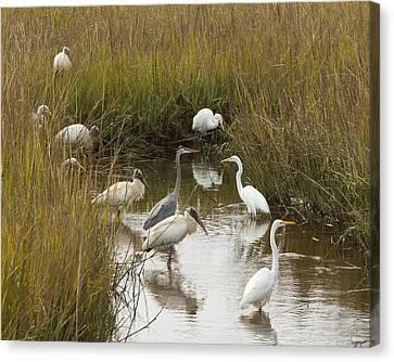 Bird Brunch Canvas Print by Patricia Schaefer