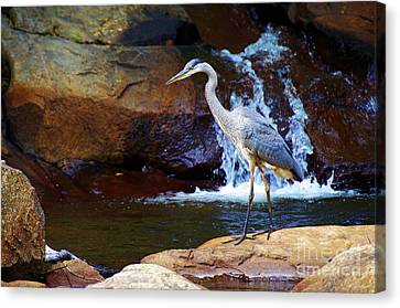 Canvas Print featuring the photograph Bird By A Waterfall  by Sarah Mullin