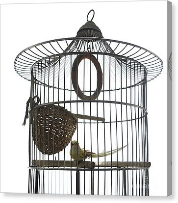 Bird Cage Canvas Print by Bernard Jaubert
