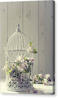 Bird Cage Canvas Print by Amanda Elwell