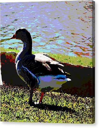 Bird Canvas Print by David Alvarez